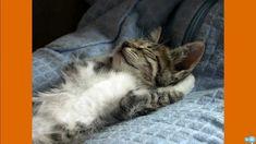 Sleep to Detox