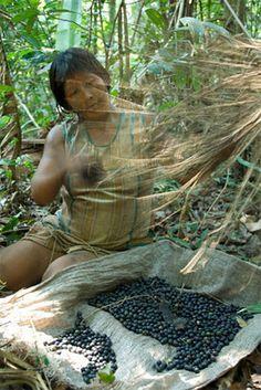 Kayapo woman collecting berries in the Brazilian Amazon