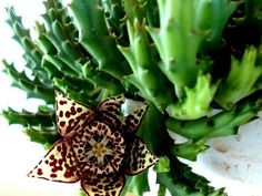 Fruit, Tips, Flowers, Food, Gardening, Decor, Decoration, Essen, Lawn And Garden