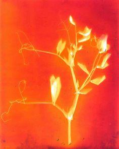 Lumen Printing · Lomography