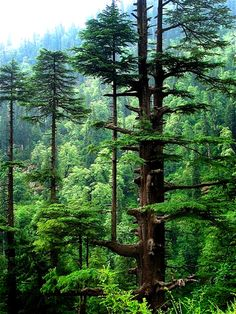 Forest in India