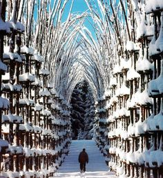 Vegetal Cathedral in Italy
