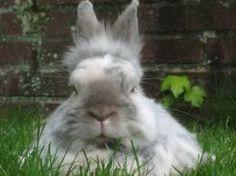 One must show respect, honour, esteem, and veneration towards elder bunnies. RT BunnyBuddhism