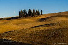 Cypress grove with moon light by hanskrusephotography