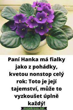 Gerbera, Floral Arrangements, Orchids, Sweet Home, African, Flowers, Plants, Gardening, House Beautiful