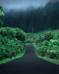 Botanischer Garten Ho'omaluhia in Kaneohe, Oahu, Hawaii - Travel Kauai, Oahu Hawaii, Hawaii Life, Hawaii Travel, Honolulu Oahu, Hawaii Beach, Beach Travel, Mexico Travel, Beach Fun