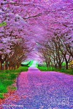 Fotografii: Ce frumoasa e natura...