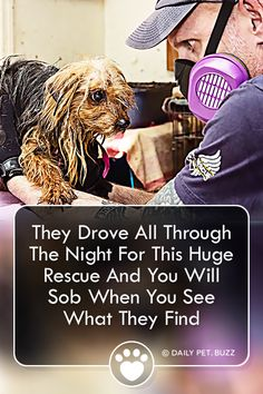A rescue team drove all night to find dozens of animals living in horrific conditions. They saved 85 animals that night. Don't miss this incredible rescue story. Happy Stories, Feel Good Stories, Dog Stories, Shelter Dogs, Animal Shelter, Rescue Dogs, Animal Rescue, Newborn Puppies, Dogs And Puppies