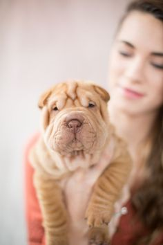 Madison and Spartacus, the world's cutest miniature Shar-Pei | Photo by Kristen Lynne Photography #sharpei #cute #puppy