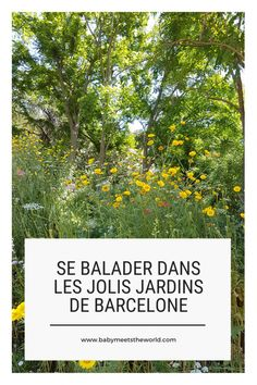 Balade à Barcelone : Jardins de Mossèn Cinto Verdaguer Nature, Plants, Gardens, Olympic Size Swimming Pool, Wild Flowers, Ride Or Die, Naturaleza, Planters, The Great Outdoors