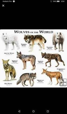 Wolves Of The World STOP KILLING WOLVES