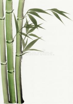 Watercolor painting of bamboo. Original art watercolor painting of bamboo Asian style painting vector illustration