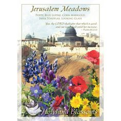 http://www.holylandblossoms.com/the_meadows#.UWswe7VJOAg #Bouquets #JerusalemMeadows #HolylandBlossoms