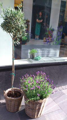 www.georgjensen-damask.com/living-room/?utm_source=pinterest_medium=autumn_campaign=23.08.13
