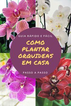 Baixe agora mesmo o Manual de Orquídeas — Guia Definitivo - Orquídeas para Iniciantes Table Decorations, Christmas Ornaments, Holiday Decor, Home Decor, Vegetable Gardening, Step By Step, Simple, Tips, Plants