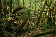 Away From Normal: Aokigahara - The suicide forest at Mt Fuji