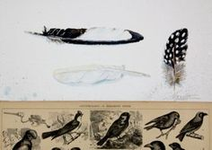 Black and White Birds<br />SOLD