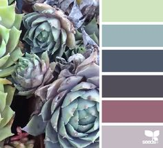 Succulent Hues - http://design-seeds.com/index.php/home/entry/succulent-hues27