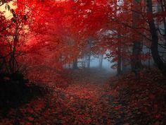bosques-encantados.jpg (700×525)