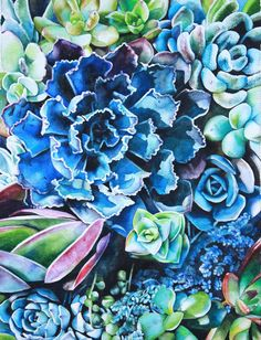 Beautiful Blue Succulent Watercolor Print by LittleApplesArt
