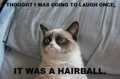 Grumpy Cat Almost Laughed Once Funny Pic