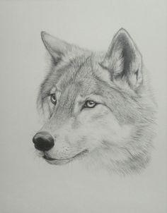 Depressed wolf drawing - photo#28