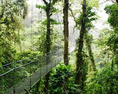 costa rica rainforest
