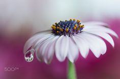 One tear on my skin... by Silvia Spedicato on 500px