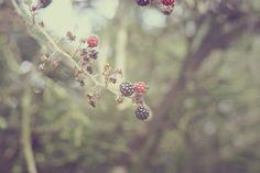 autumn berries. by beth retro, via Flickr