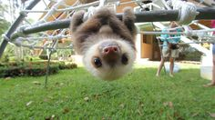 Állítólag nemzetközi Sloth Week van. Csak mindenki túl lusta megtartani.