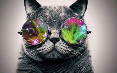 süße katzen Brille mit glitzernden Gläsern