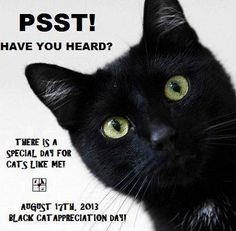 It's Black Cat Appreciation Day! Black cats have often been victims of superstition linking them to evil. They're still the last to be adopted in shelters. But the truth is that black cats are just as lovable as any other cats and fur color, like skin color, isn't really important at all. Just like with people, it's what's inside that counts! Cherokee Billie