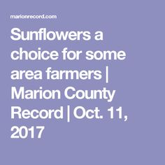 Sunflowers a choice for some area farmers | Marion County Record | Oct. 11, 2017