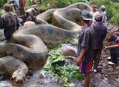 Resultado de imagem para fotos de ataques de animais selvagens a seres humanos