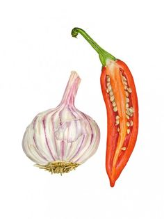 Chilli and Garlic - Anna Mason Art Vegetable Illustration, Fruit Illustration, Food Illustrations, Botanical Drawings, Botanical Prints, Anna Mason, Vegetable Painting, Watercolor Fruit, Food Drawing