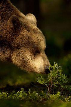 Bear by Edwin Kats