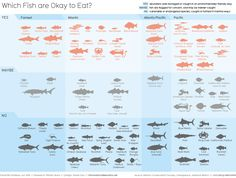 Over-exploitation. Destructive fishing techniques. Polluting fish farms. How do you know which fish are fine for your fork? by guardian.co.uk #Seafood #Infographic