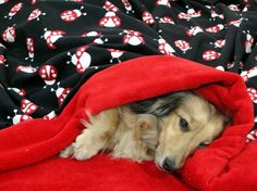 LadyBug Love - Snuggle Sack  for Small Dogs -Includes Personalization by rendachs, $50.00