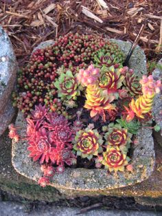 Sempervivum and Sedum in Hypertufa Container--This is the year I make my own hypertufa pots!