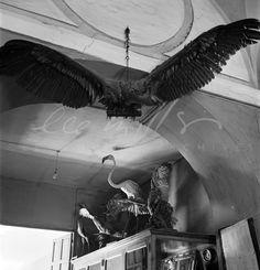 Pasillo con pájaros disecados de la antigua Sociedad de Ciencias... Archivo Lee Miller.