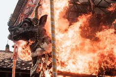 Fire engulfs the black bull sarchopagus during a royal cremation ritual in Bali, Indonesia.