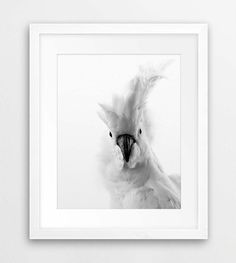 White Cockatoo Print, Australian Bird, Parrot Photo Black And White, Tropical Art, Modern Wall Art, Nursery, Kids Room Decor, Printable Art by synplus on Etsy https://www.etsy.com/au/listing/270970278/white-cockatoo-print-australian-bird