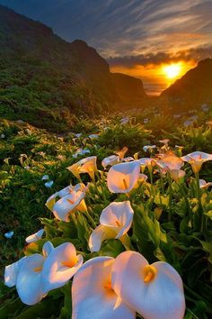 Calla Lilly Valley, Big Sur, CA (had been labeled falsely as Yosemite National Park)