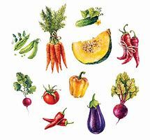 Image result for Watercolor Vegetables
