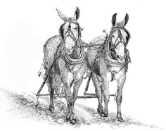 images of mules working | Mules & Work Horses - WENDY LEEDY ART