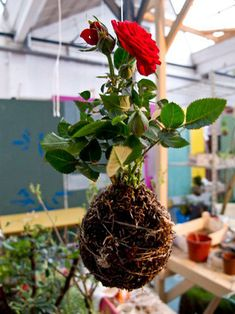 What started out two years ago as the whimsical project of Fedor, a Dutch fellow about whom nobody seems to know much, has blossomed into a series of string gardens: planted hanging gardens that are a variation of kokedama, a japanese botanical style.