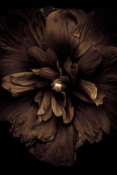 What a cool photograph idea, to have chocolate bloom like a flower out of a bean. Triple chocolate flower with a cream filling Chocolate Flowers, Chocolate Color, Chocolate Brown, Brown Aesthetic, Aesthetic Colors, Aesthetic Style, Black And Brown, Dark Brown, Brown Lip