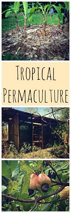 Tropical Permaculture~ Get some cool permaculture tips from a few farms in Costa Rica! www.growforagecookferment.com