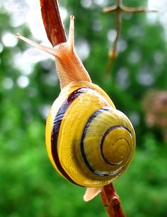 A snail can sleep for three years.