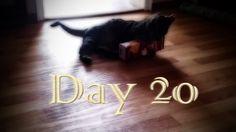 Heute zeigen wir euch Schnucki, beim Kampf mit einem Tetrapak. Viel Spaß beim ansehen (^_^)  #cats #katzen #neko #pets #haustiere #youtube #miezekatze #mieze #tiger #lion